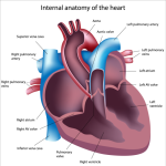 Echocardiography and Pulmonary Arterial Hypertension: A Detailed Look