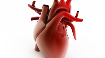It is important to assess the right ventricle of the heart of PH patients
