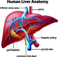 Portopulmonary hypertension