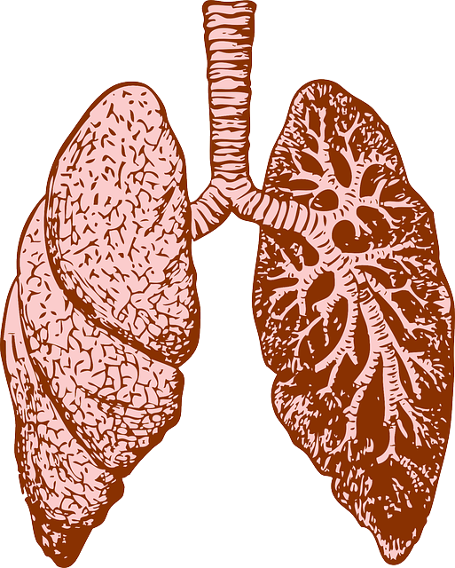 lungs PAH